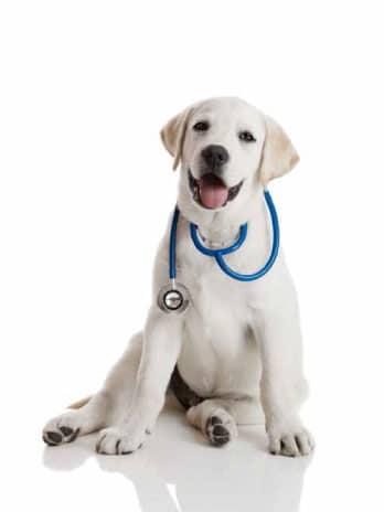 perro medico seguro mascotas seguro serenus