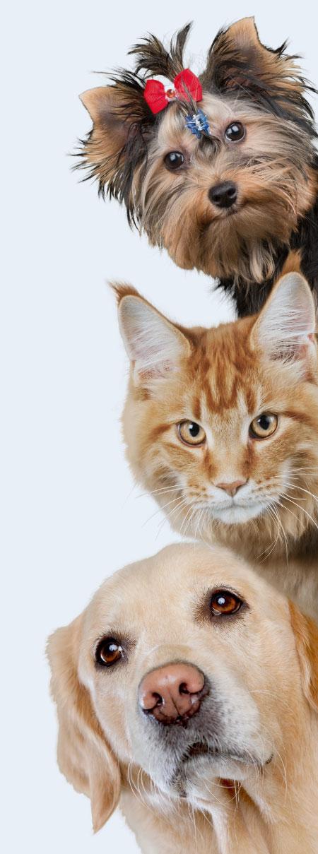 imagen mascotas serenus